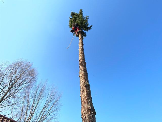 Baumklettern & Baumpflege